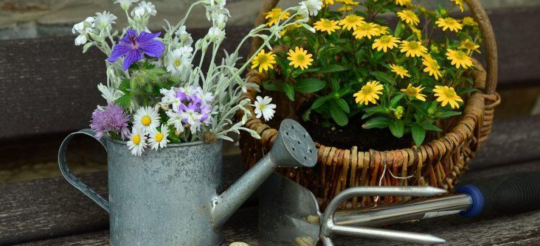 Quels outils pour bien jardiner ?